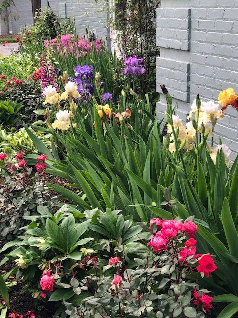 Maggie Logan garden